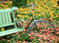Free Photo - Bicycle in the Flower Garden