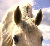 Free Photo - Horse says Hello