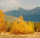 Free Photo - Fall Foliage with Mountains