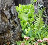 Free Photo - Garden on Tree Bark