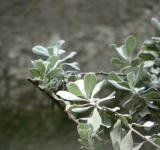 Free Photo - Pale Green Plant Background