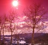 Free Photo - Aspen Trees in the Snowy Sunset