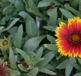 Free Photo - Red and Yellow Flower