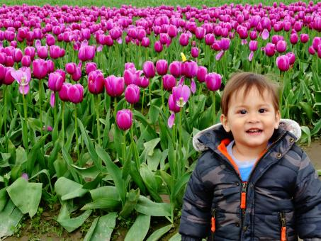 Baby boy in tulip fields - Free Stock Photo