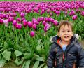 Free Photo - Baby boy in tulip fields