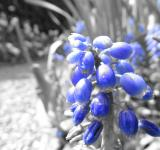 Free Photo - Blue flower