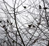 Free Photo - Birds in tree