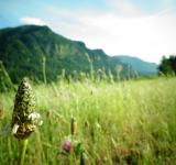 Free Photo - Little bud