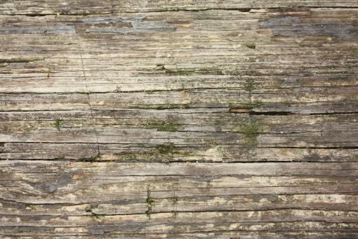 Close-up of wood grain with moss - Free Stock Photo