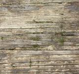Free Photo - Close-up of wood grain with moss