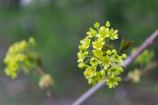 Small green flowers - Free Stock Photo