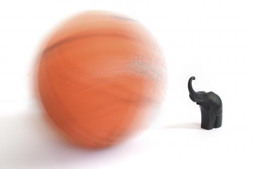 Basketball & Elephant - Free Stock Photo