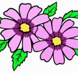 Free Photo - Purple flower clip-art