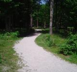 Free Photo - Winding Trail