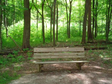 A Seat in the Shade - Free Stock Photo