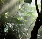 Free Photo - Sunlight shining through mist and tropic