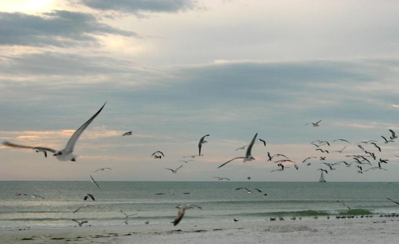 Free stock image of Seagulls flying over the beach at sunset created by Benjamin Miller
