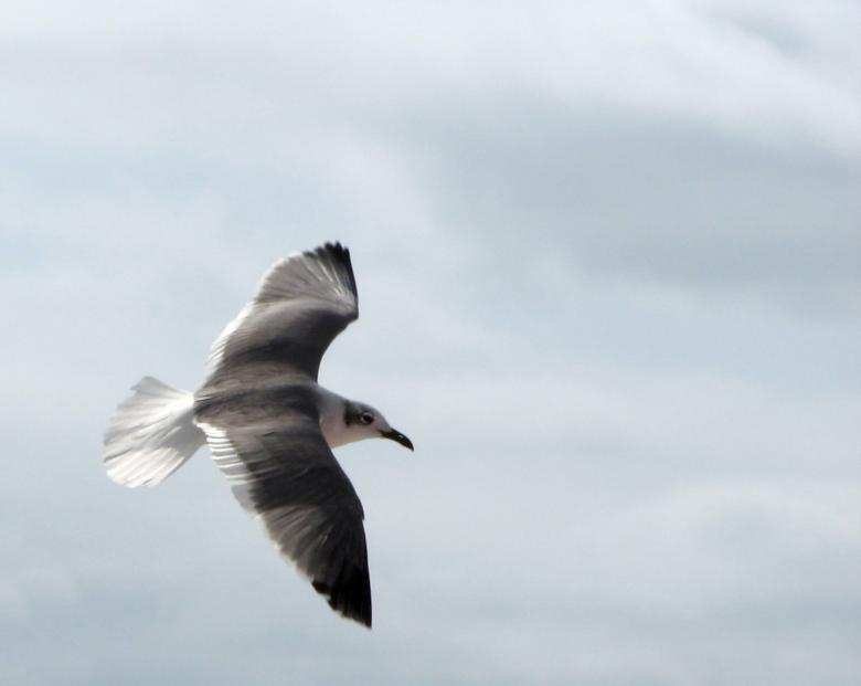 Free stock image of Close-up of a seagull flying created by Benjamin Miller