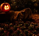 Free Photo - A Halloween jack-o-lantern on a rock