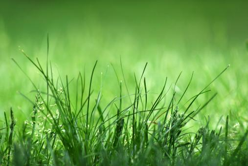 Grass Background - Free Stock Photo