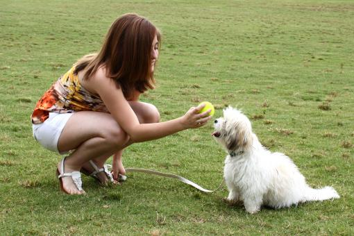 A cute young girl playing with her dog - Free Stock Photo