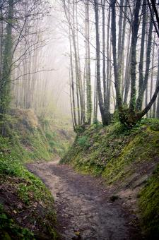 Walking path in forest at morning - Free Stock Photo