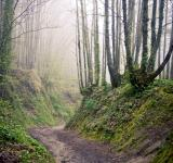Free Photo - Walking path in forest at morning
