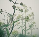 Free Photo - Plants in the mist