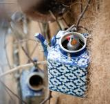 Free Photo -  little bird on birdhouse teapot