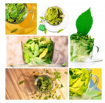 Green leaves in cups - Free Stock Photo
