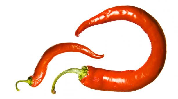 red chilli pepper - Free Stock Photo