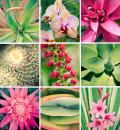 Free Photo - pink flower and plant collage