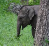 Free Photo - Wandering Cute Baby Elephant