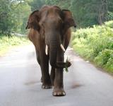 Free Photo - Beautiful Giant Elephant on the Road