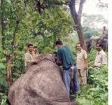 Free Photo - Radio collaring of an elephant
