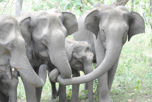 Cute Baby Elephant With Family - Free Stock Photo