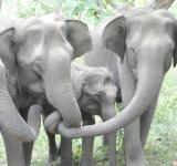 Free Photo - Cute Baby Elephant With Family