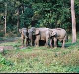 Free Photo - Herd of elephant in Buxa Tiger Reserved