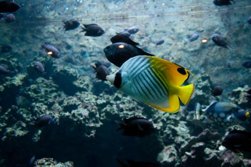 Tropical fish - Free Stock Photo
