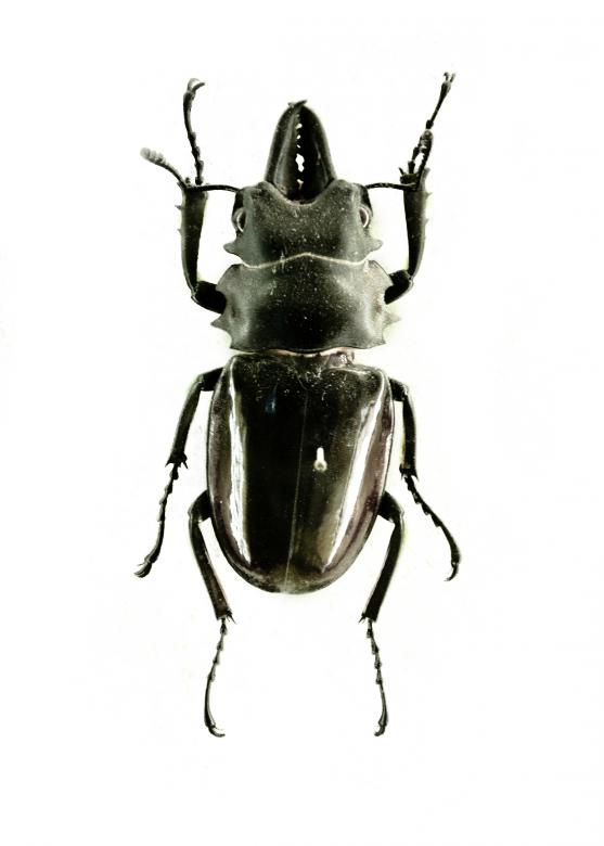 Free Stock Photo of Black beetle isolated on white Created by Merelize