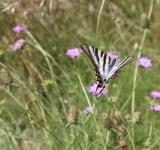 Free Photo - Butterfly in Nature