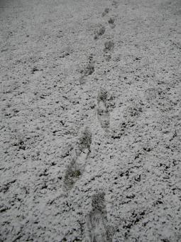 Footprints in the Snow - Free Stock Photo