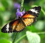 Free Photo - Closeup of an orange butterfly