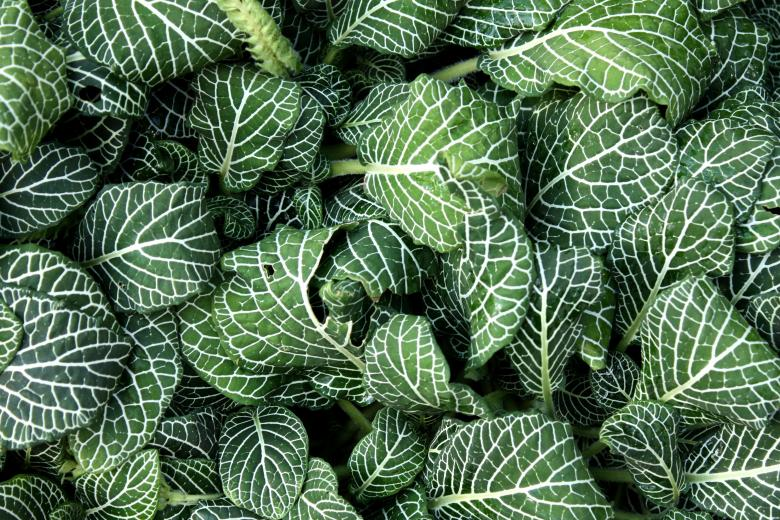 Free Stock Photo of Close-up of green leaves Created by Benjamin Miller