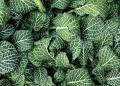 Free Photo - Close-up of green leaves