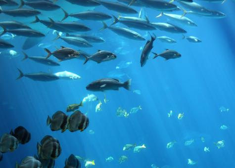 Tropical fish swimming under water - Free Stock Photo