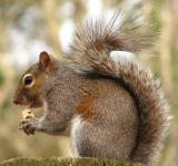 Free Photo - Close-up of a squirrel eating a nut