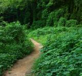 Free Photo - A dirt path through an overgrown forest