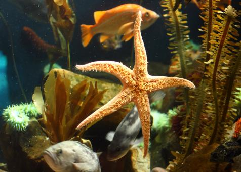 Close-up of a starfish under water - Free Stock Photo