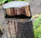 Free Photo - Cut Tree Stump